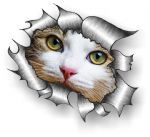Ripped Torn Metal Design With Cute White Cat Kitten Motif External Vinyl Car Sticker 105x130mm